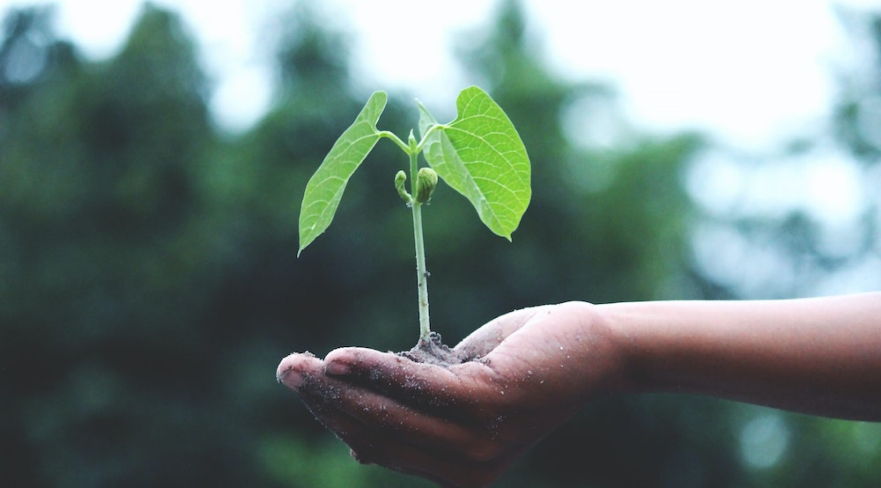person holding a sapling